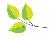 Filial verde Fotografia de Stock