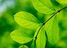 Filial verde em uma floresta Imagens de Stock Royalty Free