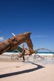 Filiale asciutta sulla spiaggia fotografia stock libera da diritti