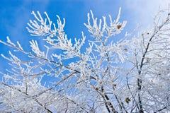Filiale congelata Fotografia Stock