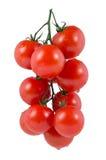 Filiale dei pomodori di ciliegia Fotografia Stock Libera da Diritti