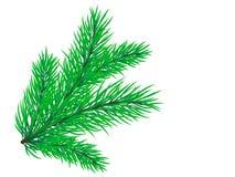 Filiale del pino Immagine Stock Libera da Diritti