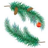 Filiale del pino con i coni Immagini Stock Libere da Diritti