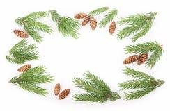 Filiale del pino con i coni su un fondo bianco fotografia stock