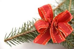 Filiale del pino con un arco rosso Fotografia Stock