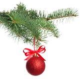 Filiale dell'albero di Natale con la sfera fotografia stock