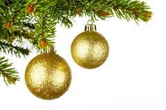 Filiale dell'albero di Natale con la sfera Fotografie Stock Libere da Diritti