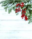 Filiale dell'albero di Natale con le bacche rosse Decorati di vacanze invernali Immagine Stock