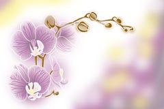 Filiale dell'orchidea rosa fotografia stock