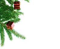 filiale dell'Pelliccia-albero Fotografie Stock Libere da Diritti