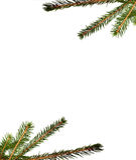 filiale dell'Pelliccia-albero Immagini Stock Libere da Diritti