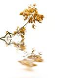 Filiale della quercia con la riflessione Fotografia Stock