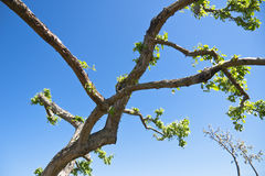 Filiale di albero immagine stock