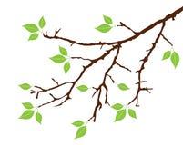 Filiale di albero illustrazione di stock