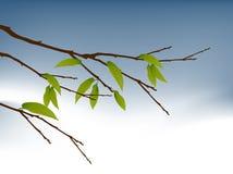 Filiale di albero illustrazione vettoriale