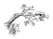 Filiale di albero con la testa dell'aquila Fotografia Stock