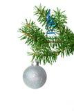 Filiale di albero dell'abete con la sfera d'argento Immagine Stock