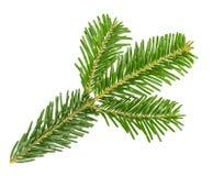 Filiale di albero dell'abete isolata su bianco Fotografia Stock Libera da Diritti