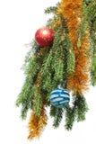 Filiale di albero dell'abete su una priorità bassa bianca Fotografia Stock