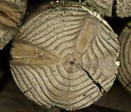 Filiale di albero della prugna Fotografia Stock
