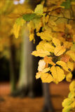 Filiale di albero di autunno Fotografia Stock Libera da Diritti