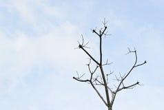 Filiale di albero guasto contro cielo blu Immagine Stock