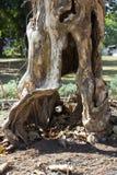 Filiale di albero morta Fotografie Stock Libere da Diritti