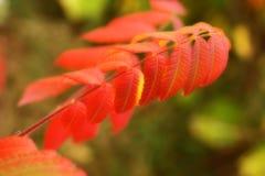 Filiale di albero nei colori completi di caduta. Immagini Stock