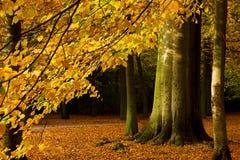 Filiale di autunno Immagini Stock
