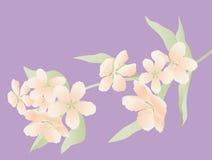 Filiale di fioritura Fotografie Stock