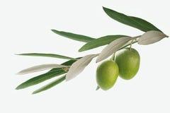 Filiale di olive Immagini Stock