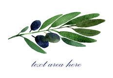 Filiale di olive nere Immagine Stock Libera da Diritti