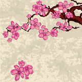 Filiale di Sakura Fotografie Stock