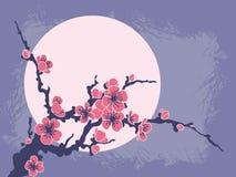 Filiale di Sakura contro il sole Illustrazione di Stock