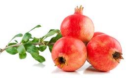 Filiale di un albero del granato con la frutta ed i fogli Fotografia Stock