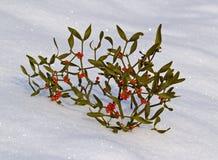 Filiale di un vischio con le bacche su neve Fotografie Stock Libere da Diritti