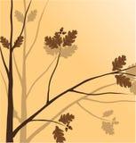 Filiale di una pianta Fotografia Stock