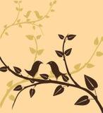 Filiale di una pianta Immagini Stock