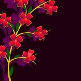 Filiale di una pianta Fotografie Stock Libere da Diritti