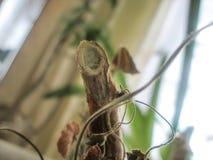 Filiale di una pianta Immagini Stock Libere da Diritti
