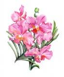Filiale disegnata a mano dell'orchidea Fotografie Stock