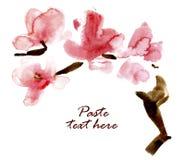 Filiale sbocciante dell'acquerello della ciliegia. Fotografia Stock