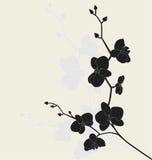 Filiale stilizzata dell'orchidea Fotografie Stock Libere da Diritti