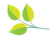 Filiale verde Fotografia Stock
