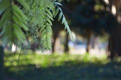 Filialen av ett träd Royaltyfria Bilder