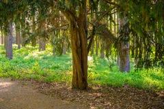 Filialen av ett träd och barnet gör grön lövverk fotografering för bildbyråer