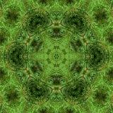 Filialen av grönt fluffigt sörjer arkivbild
