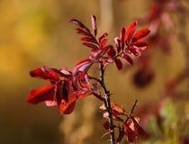 Filialen av löst steg, hösten Fotografering för Bildbyråer