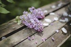 Filialen av lilan blommar på träbakgrund Royaltyfri Bild