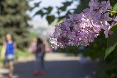 Filialen av lilan på den therural gatan kan in Arkivfoton